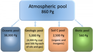 global carbon pools